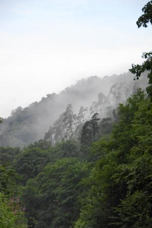 Nebelschlucht